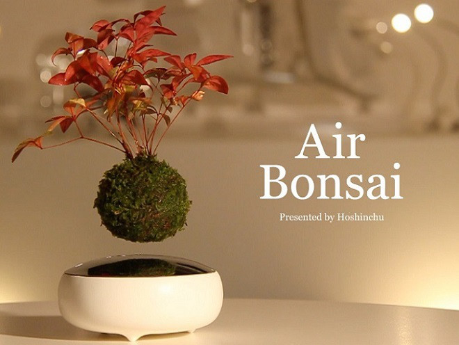 空中盆栽image02 | Inventor of Air bonsai and the floating bonsai image02